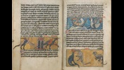 Pages from a medieval bestiary and aviary, containing text and illustrations of flying lizards or dragons, a saw-fish approaching a ship and a viper eating another creature