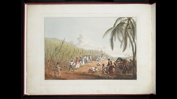 Colour print portraying enslaved people harvesting sugarcane and a white overseer on horseback, from William Clark's Ten Views in the island of Antigua