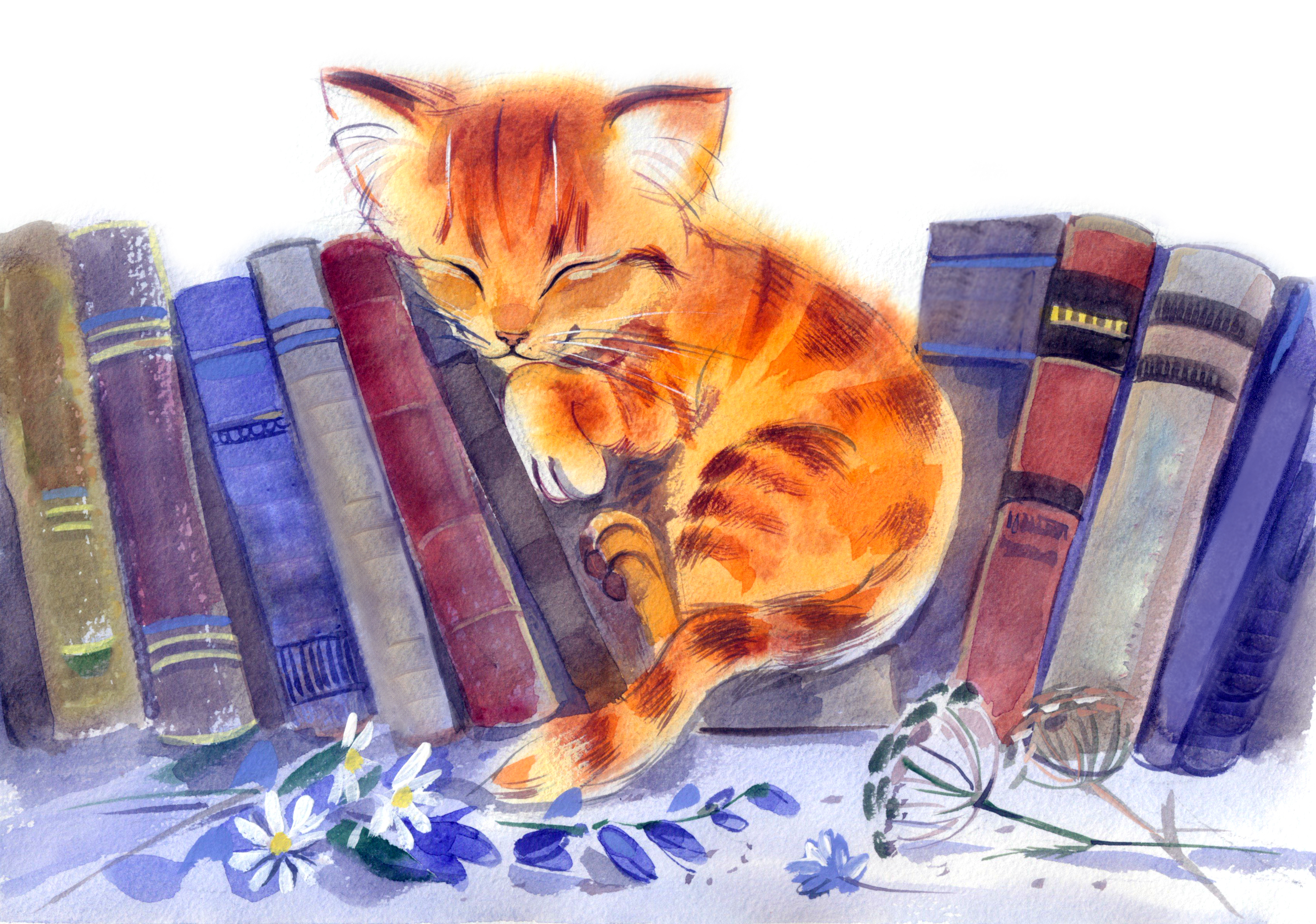 Kitten asleep on bookshelf