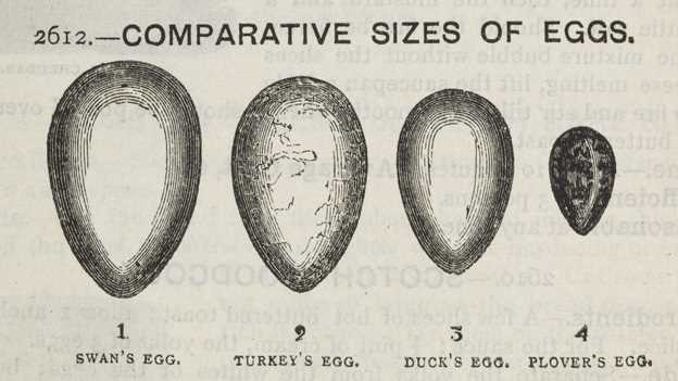 Image depicting various egg sizes. Ranging from Swan though to Plover.