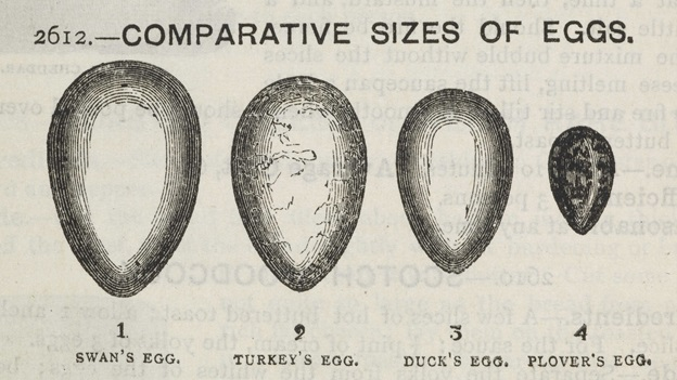 A drawing comparing the sizes of birds' eggs - swan, turkey, duck, plover