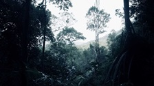 A rainforest.