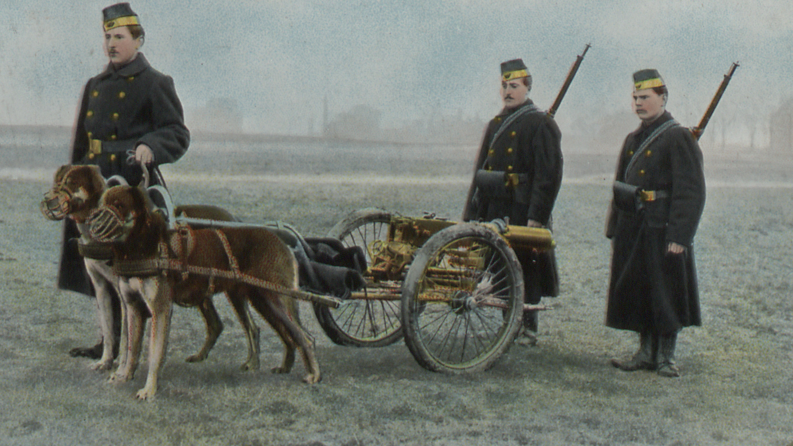Banner for Animals in war article. A colour photograph that shows 3 soldiers surrounding a small cart with artillery attached. The cart is led by two large dogs wearing muzzles.