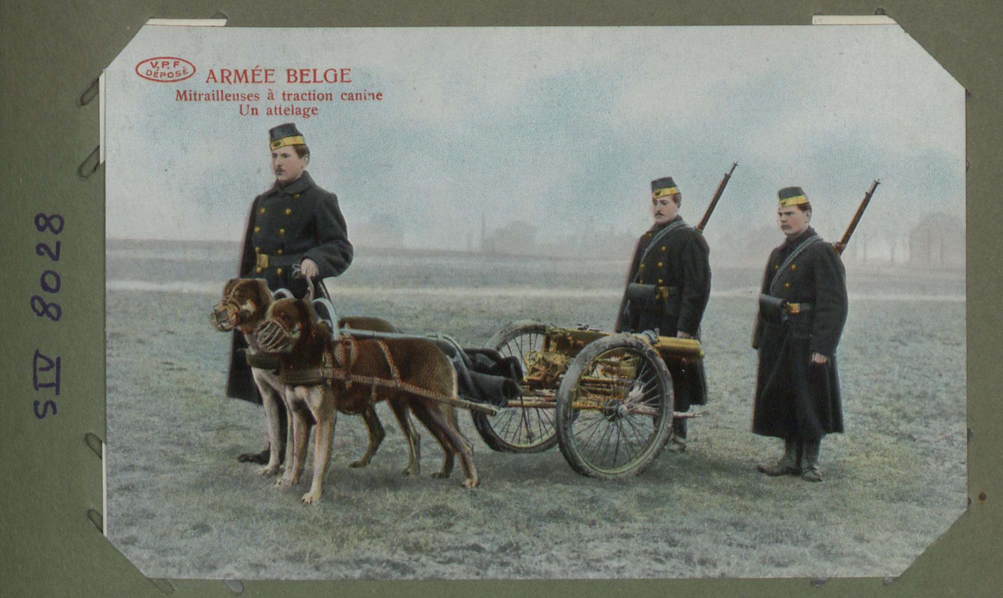 Armée Belge. Mitrailleuses à traction canine. Un attelage'