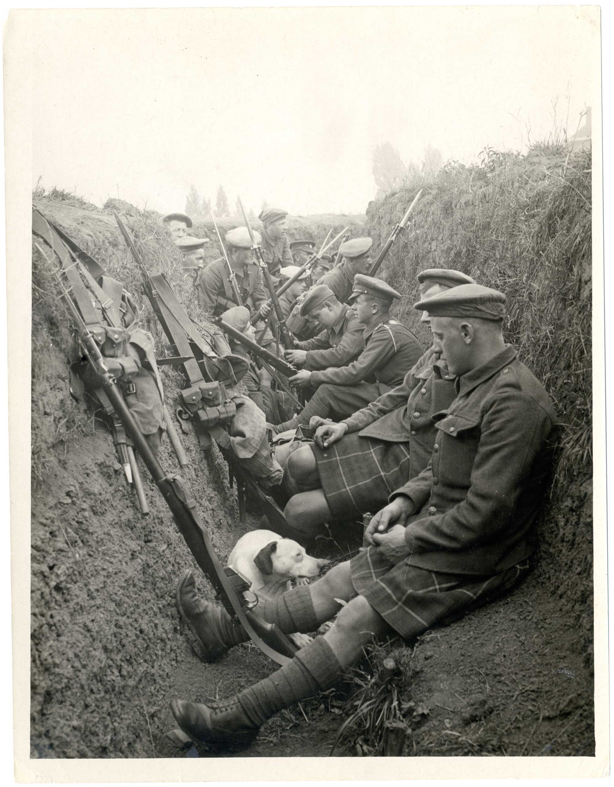 Photograph, 1915, showing a group of Highland Territorial soldiers in a trench, armed with bayonets. Also in the trench is a small dog: many battalions had dogs as mascots.