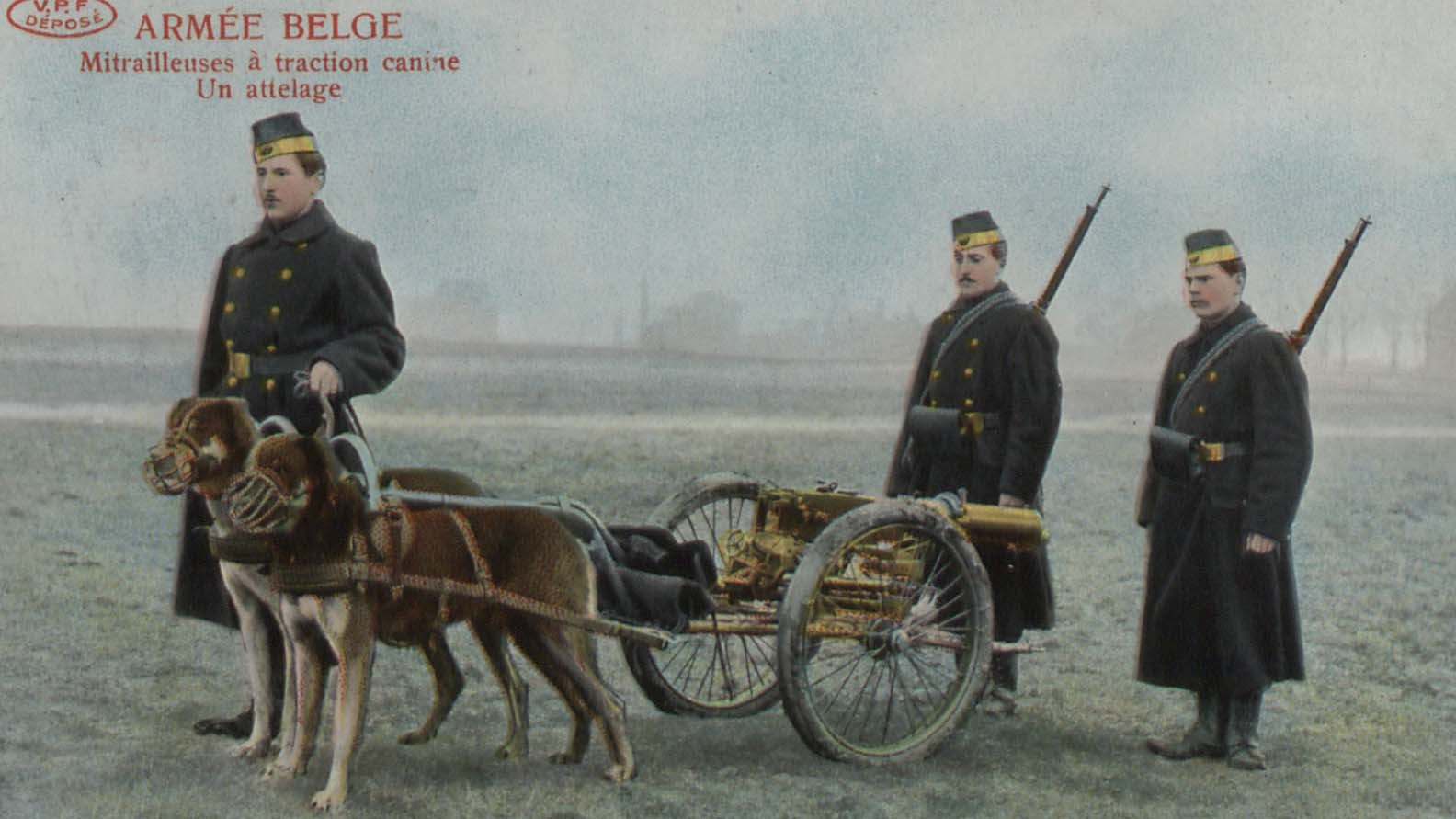 Belgian army. Machine guns pulled by dogs (detail)