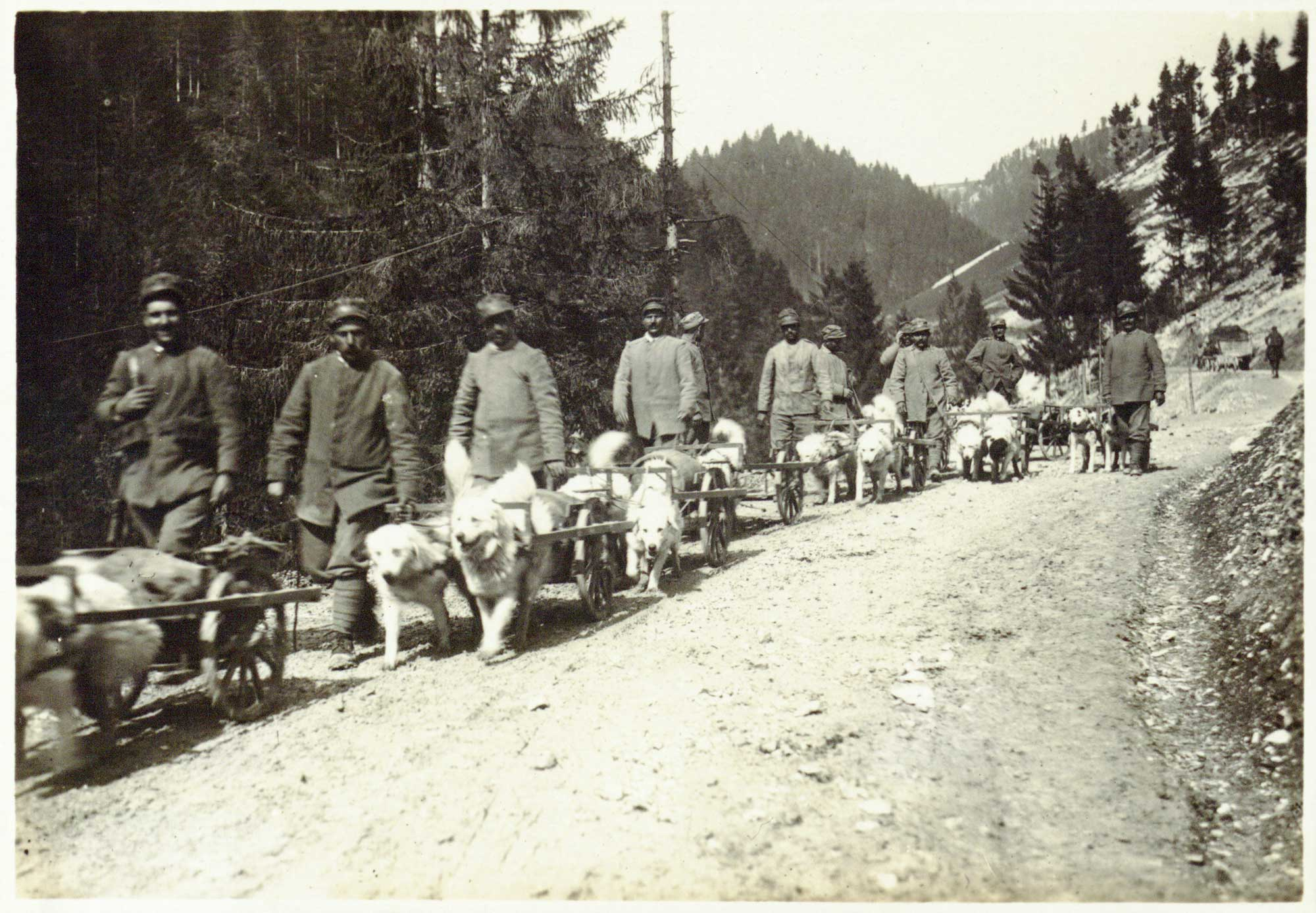 Dogs drawing carts transporting material and supplies for the Austro-Hungarian Army.