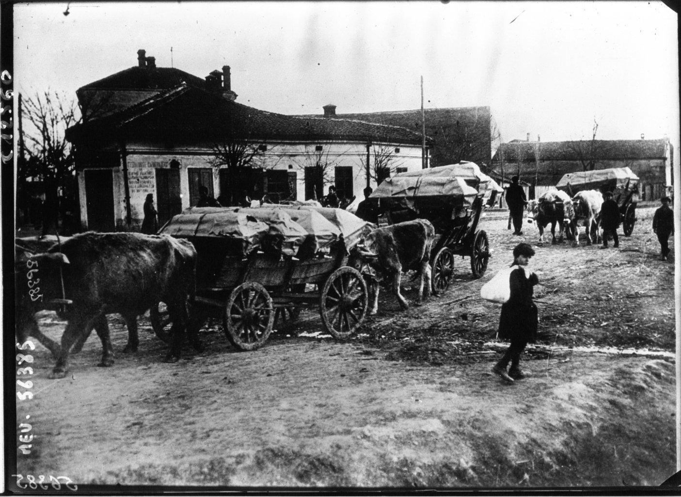 Transportation of typhus victims