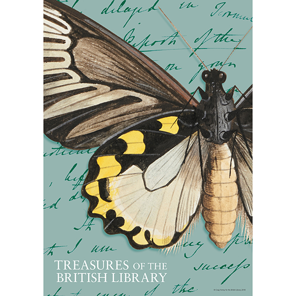 Treasures Butterfly Poster