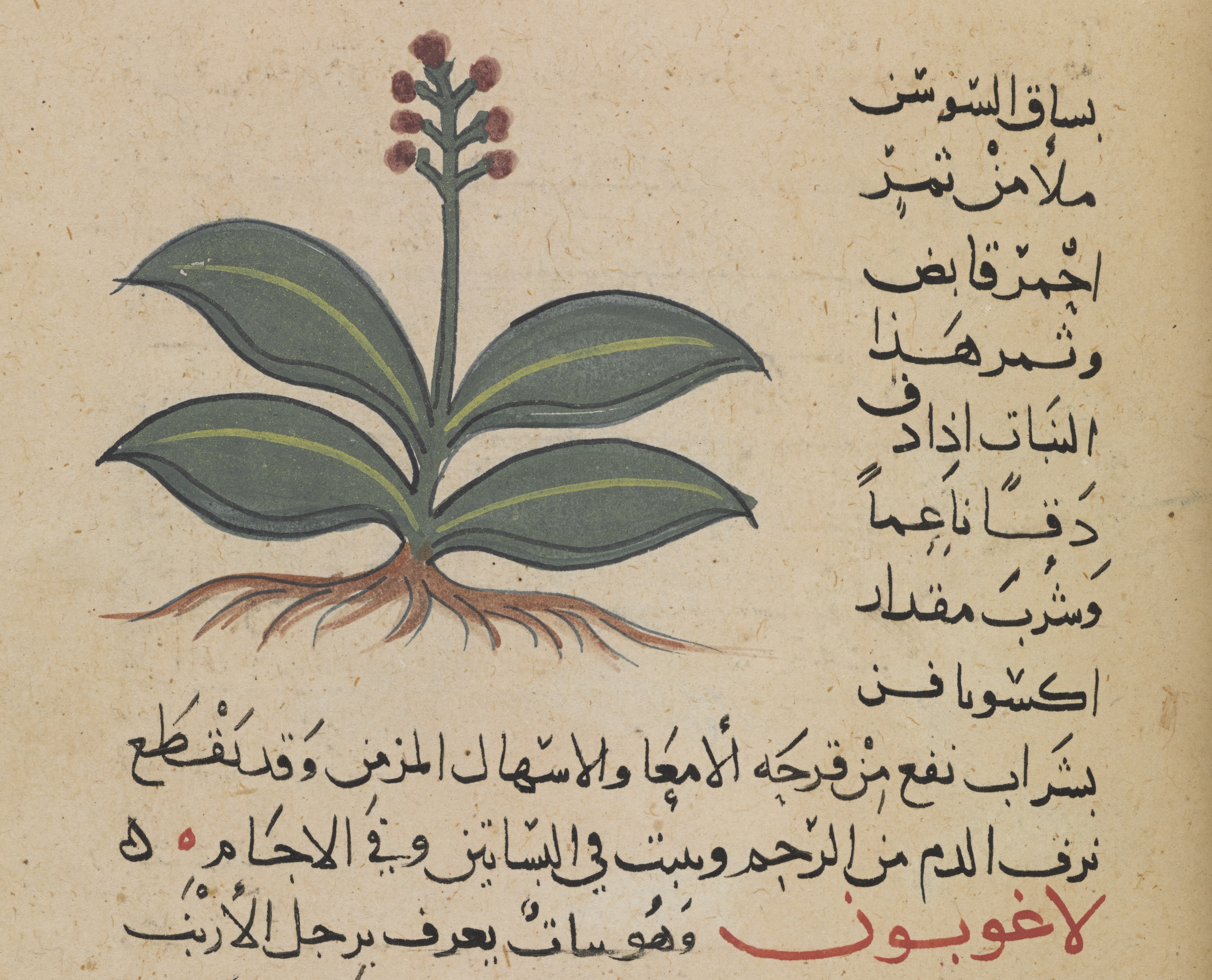 Arabic HTR - The British Library