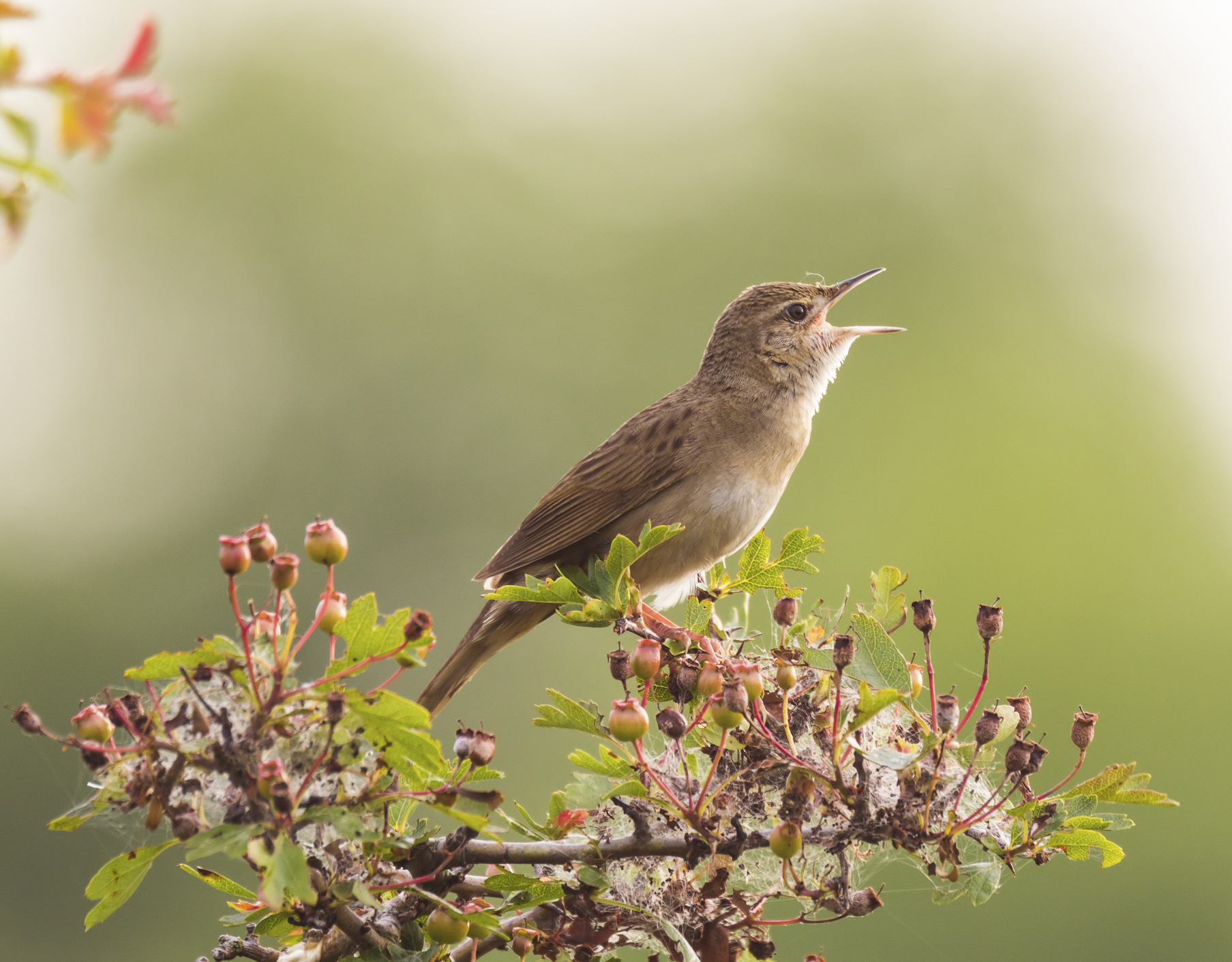 Wildlife and environmental sounds - The British Library