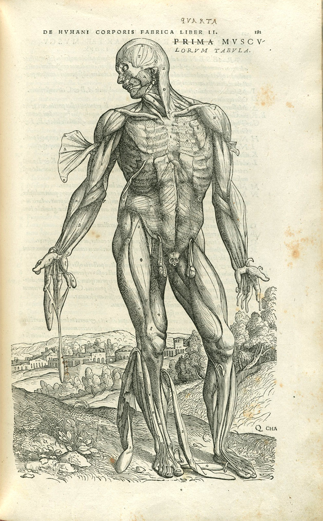 Vesaliuss Anatomy Lessons