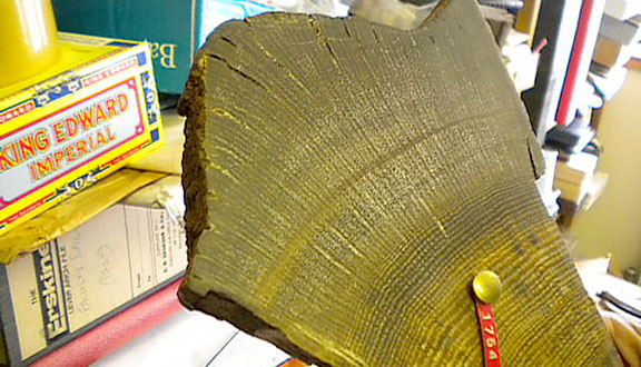 Annual growth rings in sample of Irish bog oak