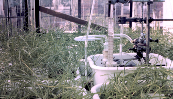 Sulphur dioxide sampling bubbler in fumigation chamber, Imperial College 1972